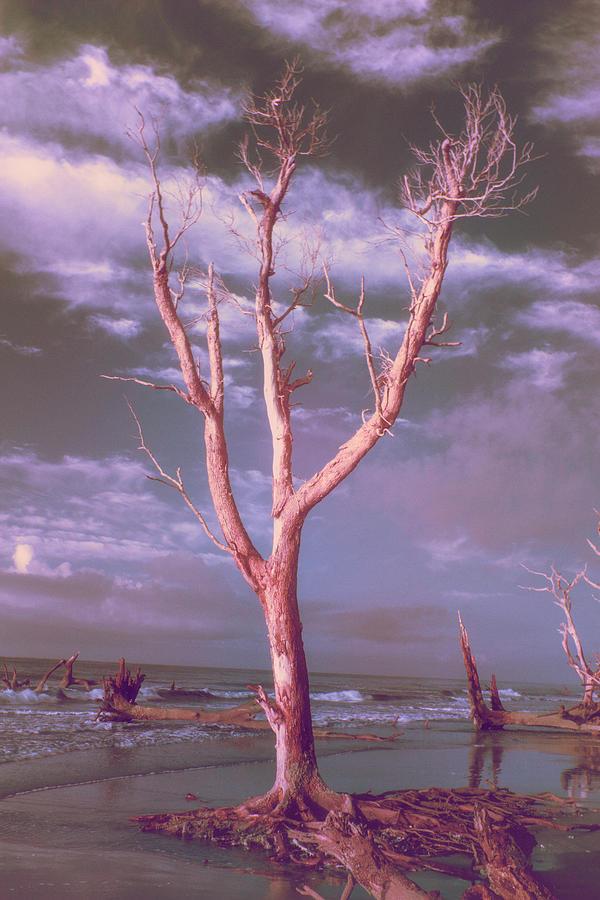 After Apocalypse Digital Art