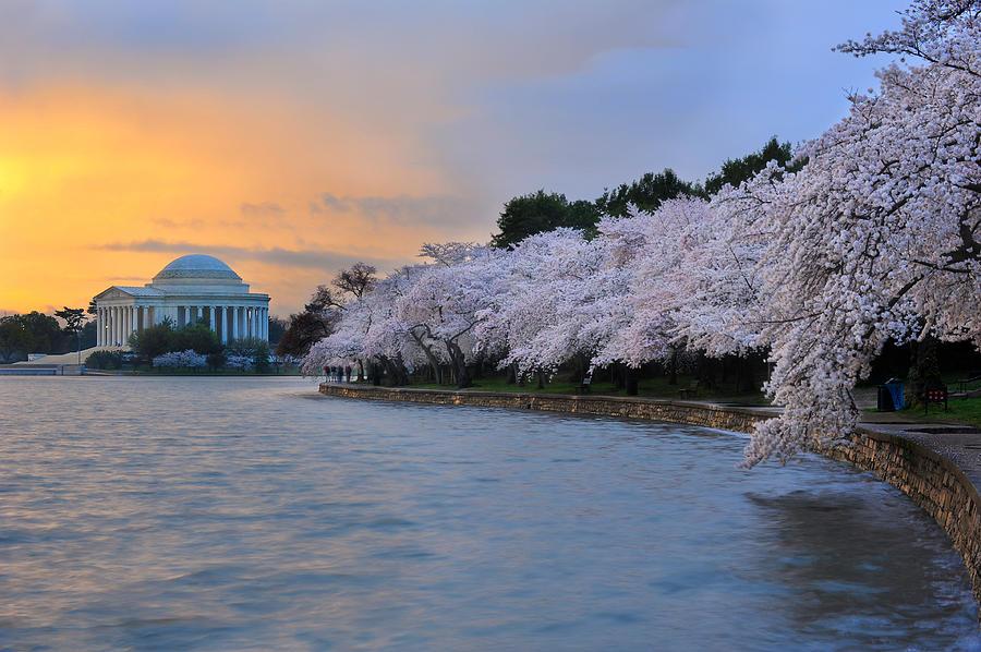 National Cherry Blossom Festival Photograph - After The Rain by Bernard Chen