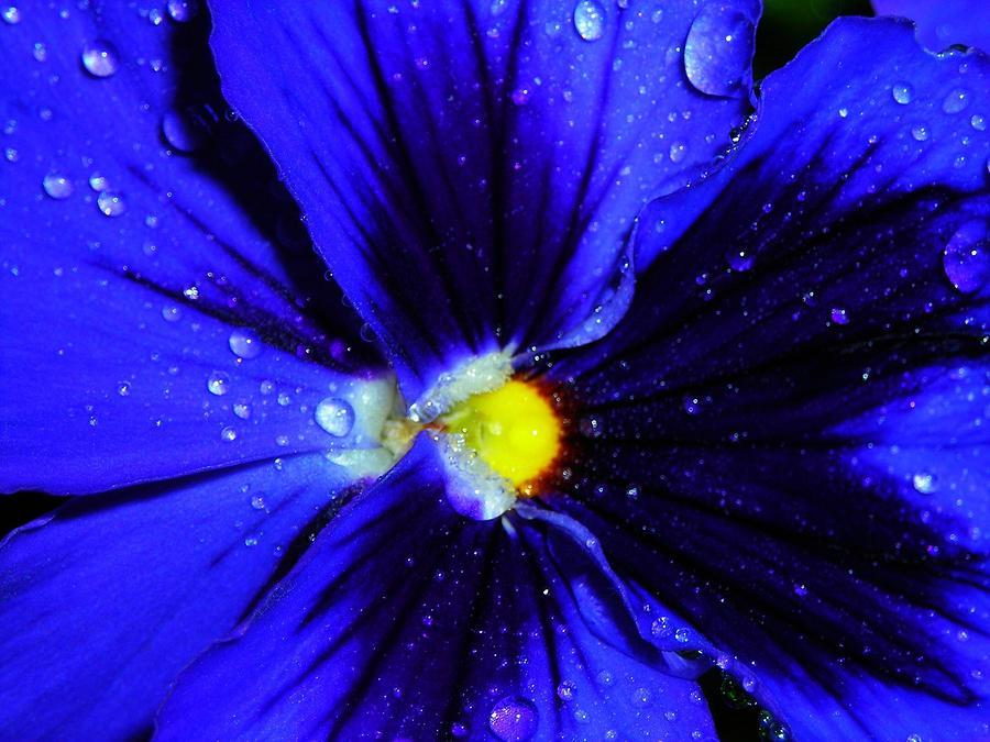 Flower Photograph - After The Rain ... by Juergen Weiss