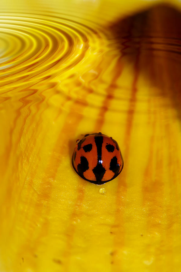 Ladybeetle Photograph - After The Rain by Lesley Smitheringale