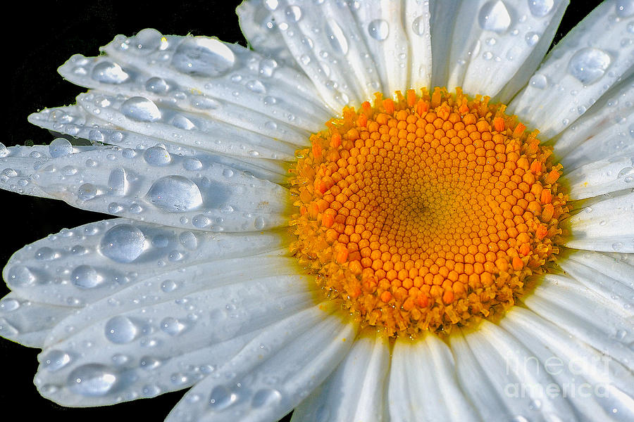 Flowers Photograph - After The Rain by Neil Doren