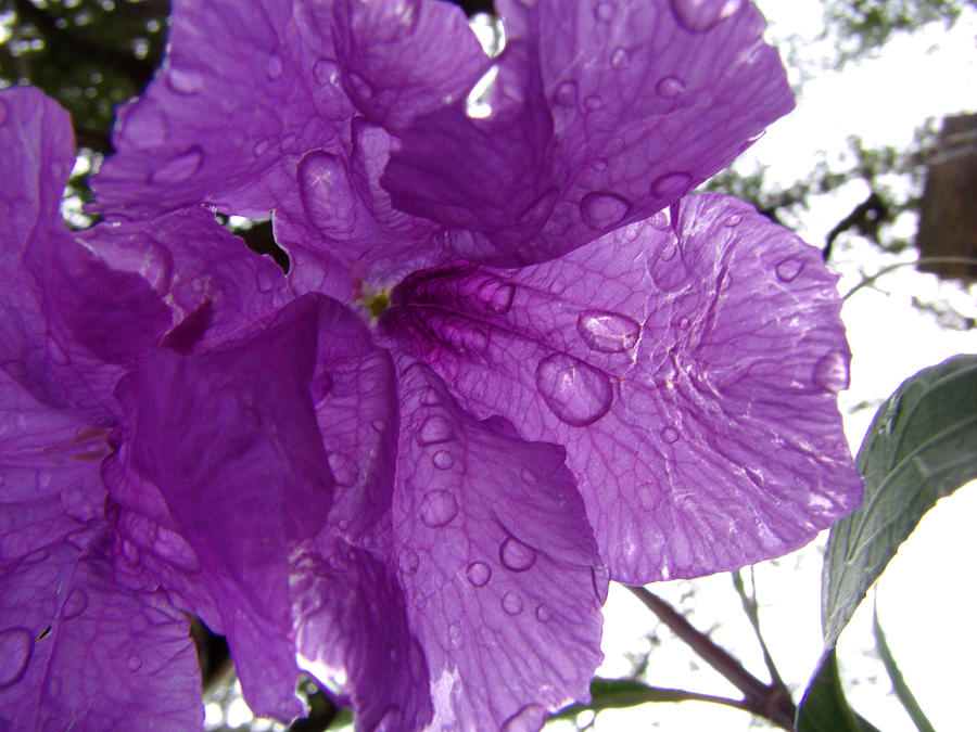 Purple Photograph - After The Rain by Nicole I Hamilton