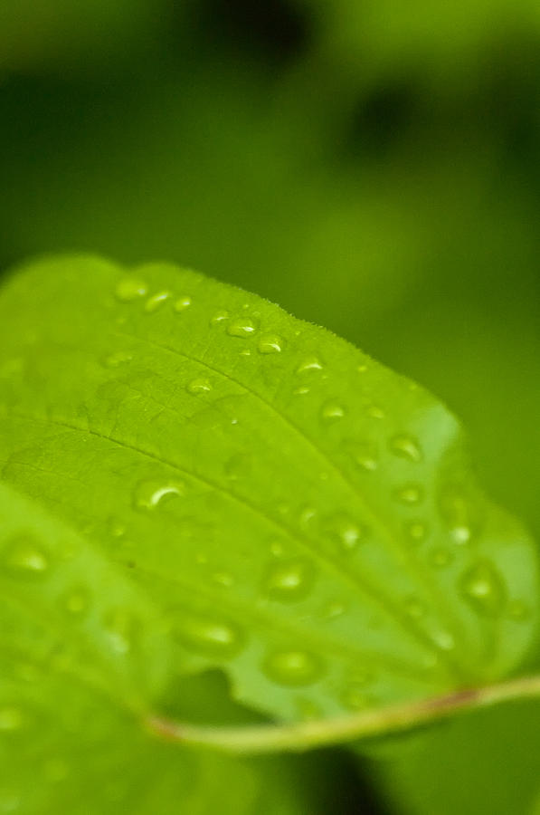 Closeup Photograph - After The Rainfall 2 by R J Ruppenthal