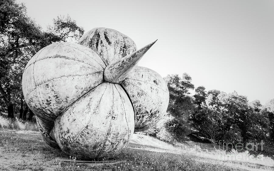 Landscape Photograph - After The Reign by Dean Birinyi