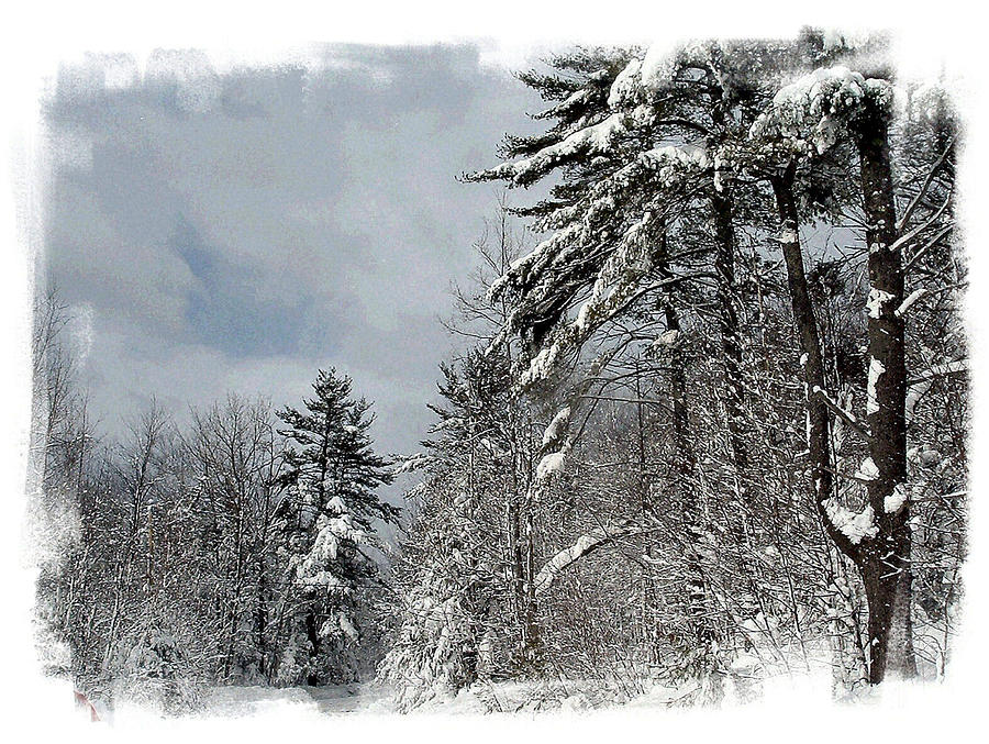 Winter Photograph - After The Storm by Rose Guay