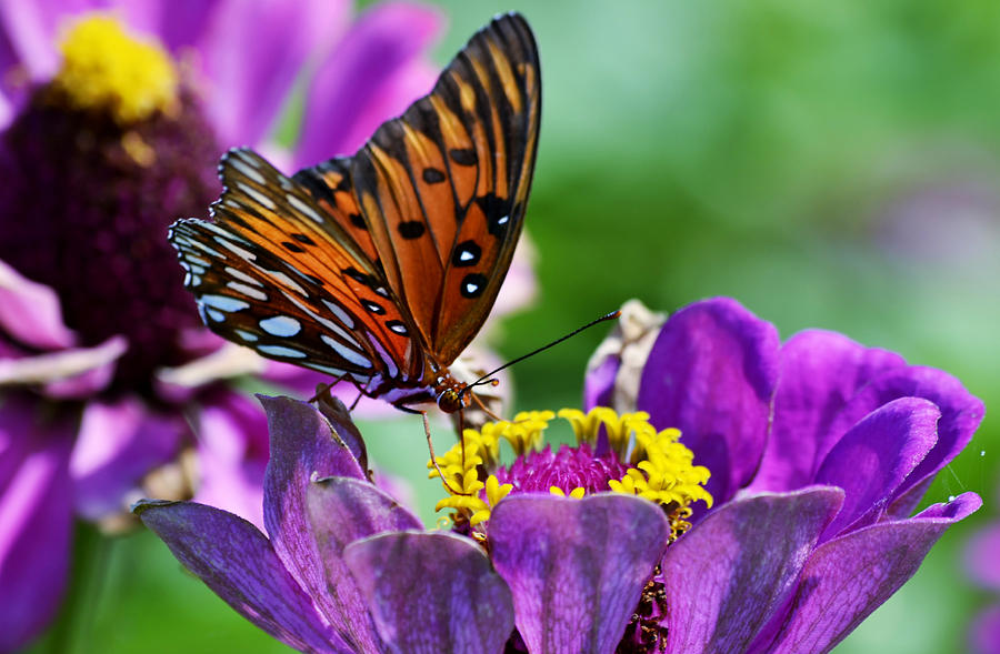 Naples Botanical Garden Photograph - Afternoon Delight by Melanie Moraga