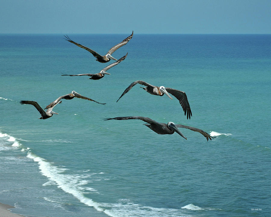 Florida Photograph - Afternoon Flight by Frank Mari