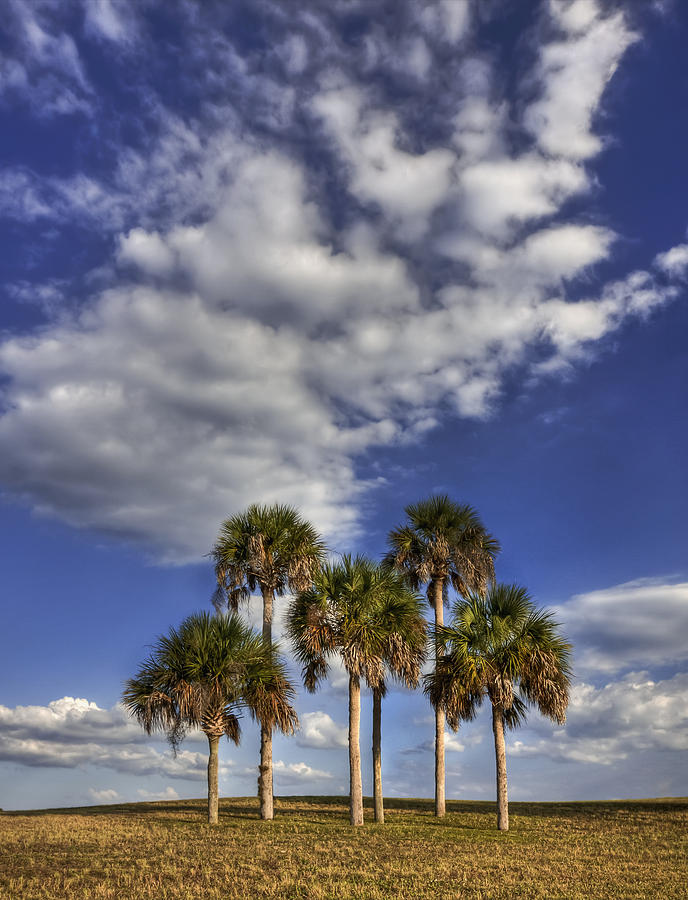 Palm Photograph - Afternoon High by Evelina Kremsdorf