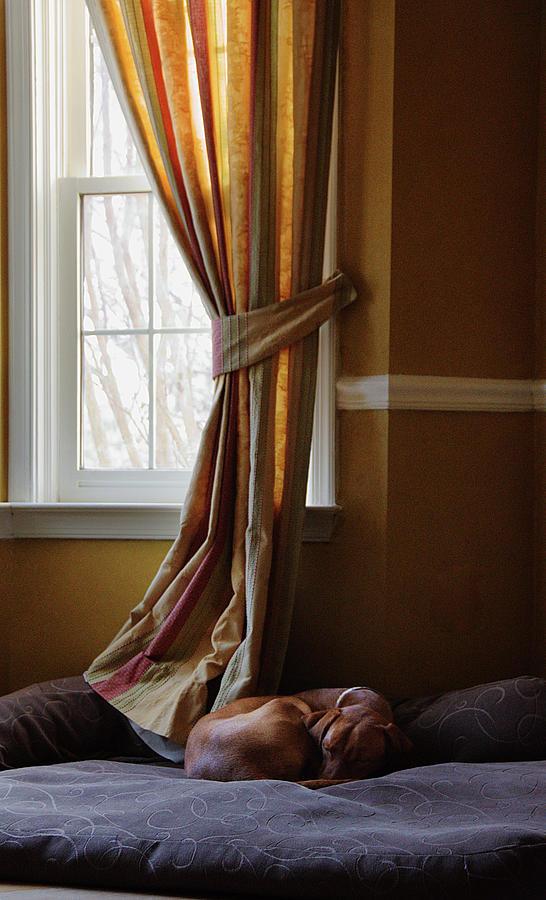 Afternoon Nap Photograph