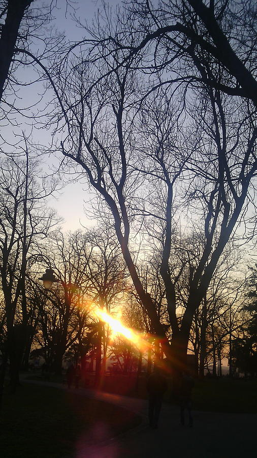 Landscape Photograph - Afternoon Sunlight In Belgrade Kelemegdan Park by Anamarija Marinovic