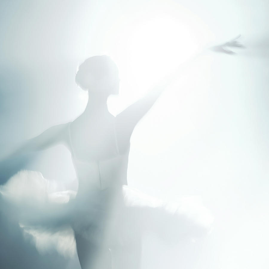 Swan Lake Photograph - Against Of Light by Nikolay Krusser