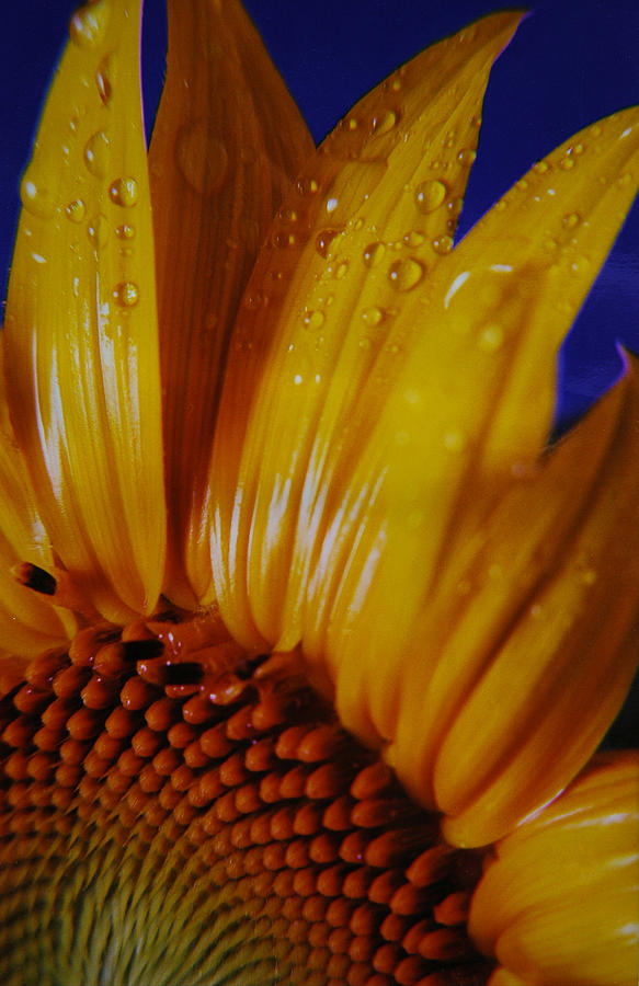 Floral Photograph - Against The Blue by Lori Mellen-Pagliaro