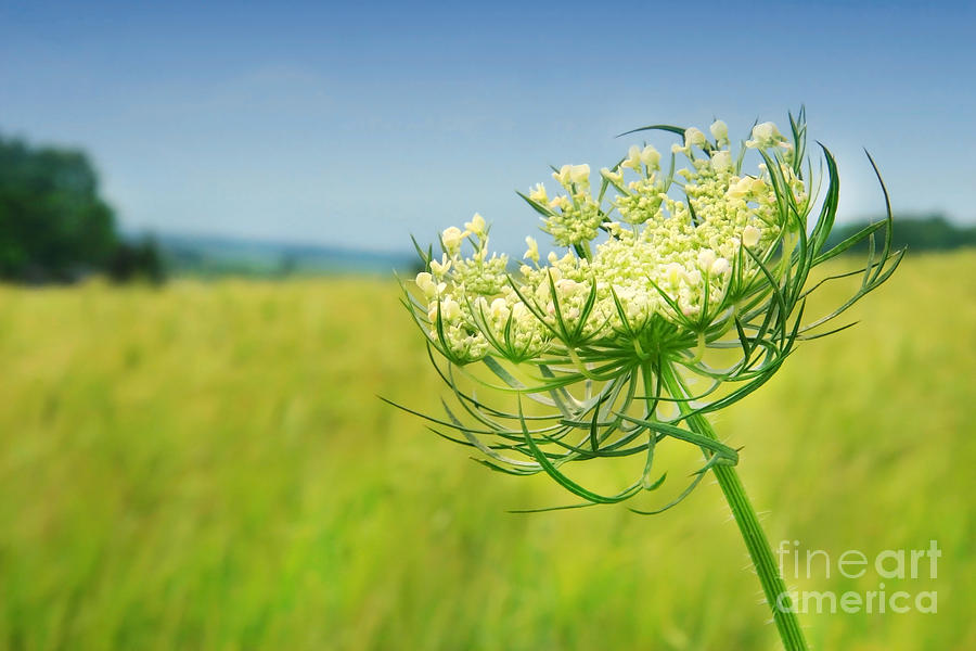 Background Photograph - Against The Blue Sky by Sandra Cunningham