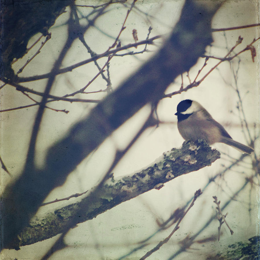 Chickadee Photograph - Against The Wind by Amy Tyler