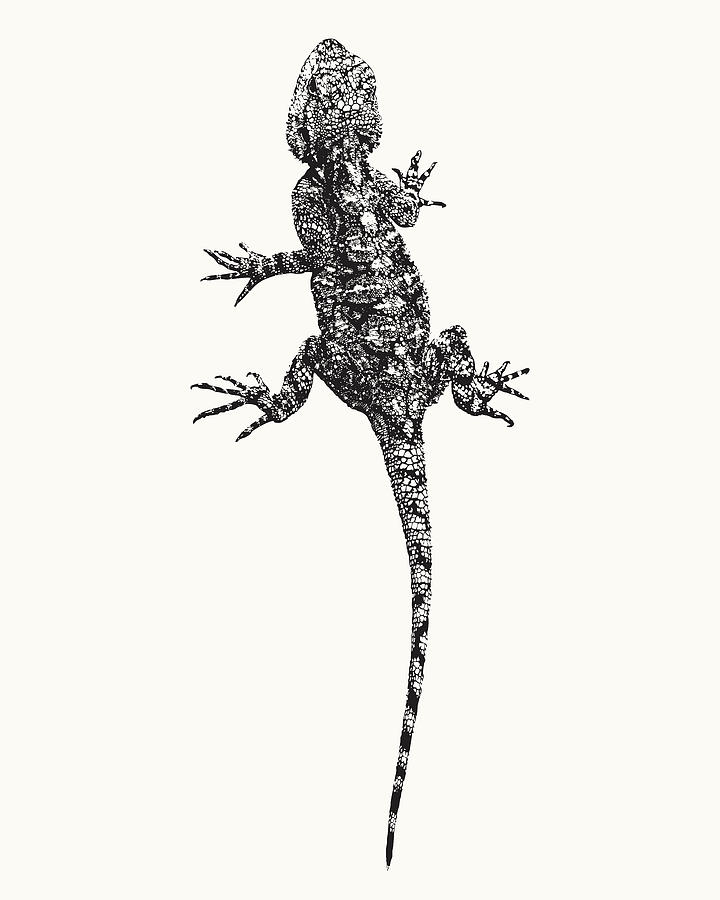 Agama Photograph - Agama Lizard in Graphic Monochrome by Scotch Macaskill