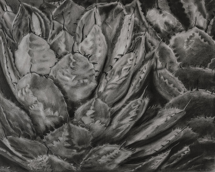 Agave Cactus by Sheila Johns