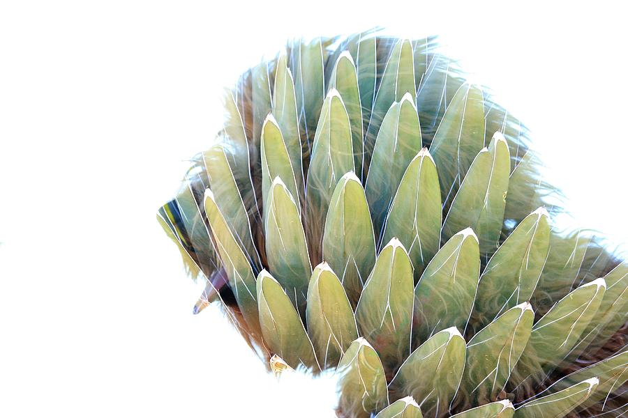 Double Photograph - Agave Dog by Greg Wickenburg