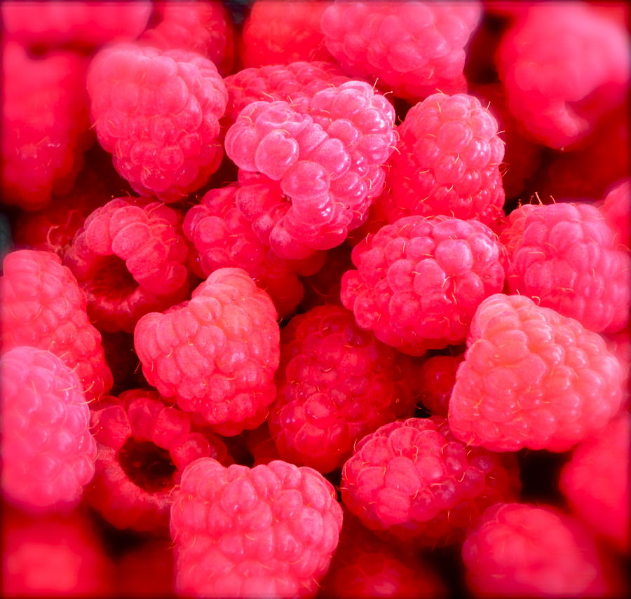 Photograph Of Berries Photograph - Agenda For Today ... Raspberry Jam by Gwyn Newcombe