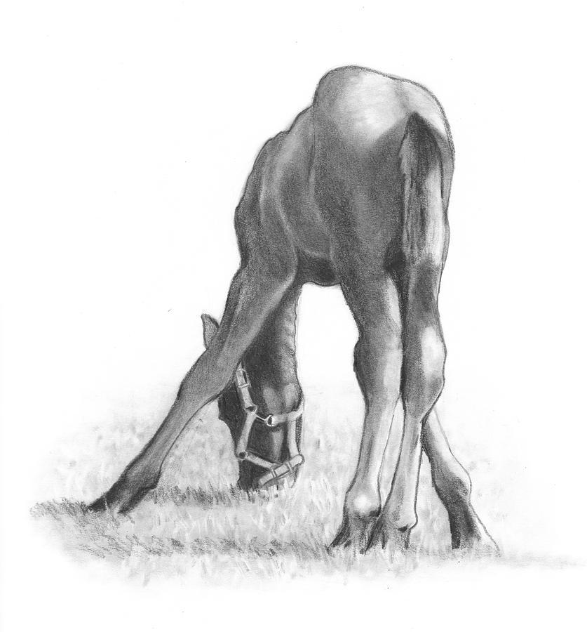 Horse Drawing - Agility by Joyce Geleynse