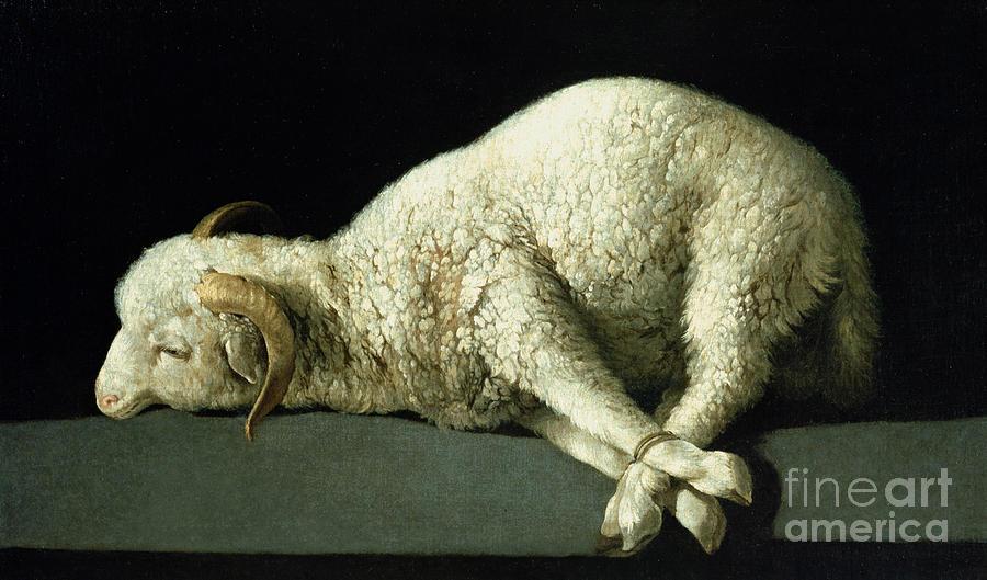 Agnus Painting - Agnus Dei by Francisco de Zurbaran
