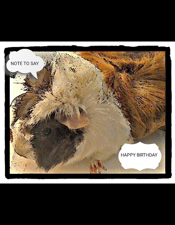 Animal Photograph - Ahh Guinea Pig Greetings by Barbara Searcy