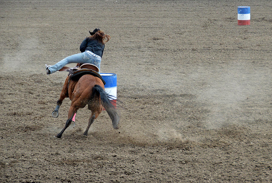 Horse Photograph - Airborne by Fay Geddes