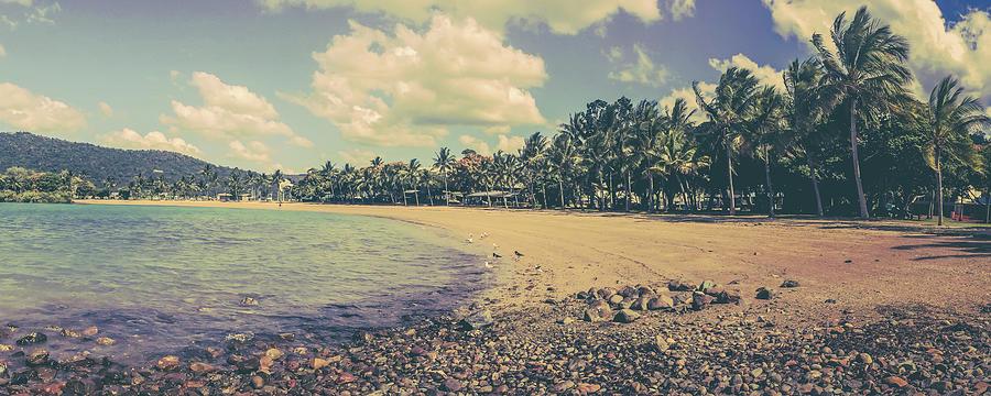 Airlie Beach Palms Photograph