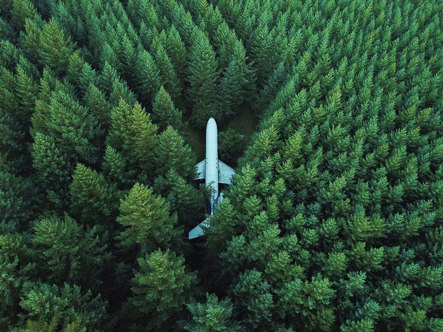 Airplane Photograph - Airplane in forest by David Kovalenko