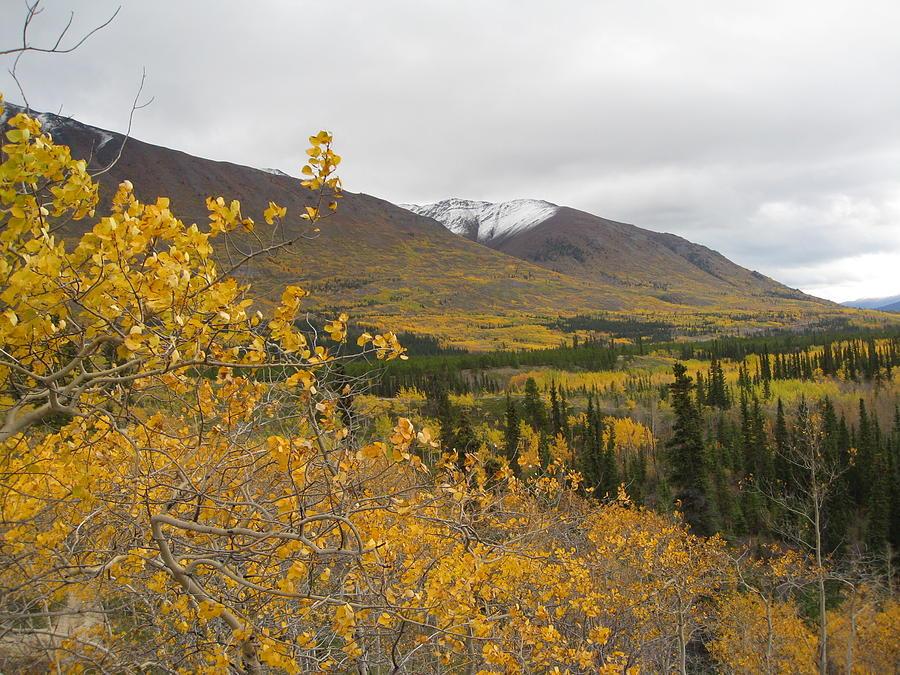 Alaska Frontier Photograph by Kimber  Butler