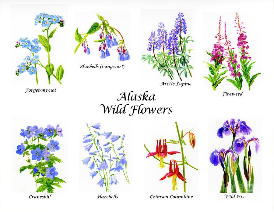 Alaska Wild Flowers Poster Horizontal Painting By Sharon