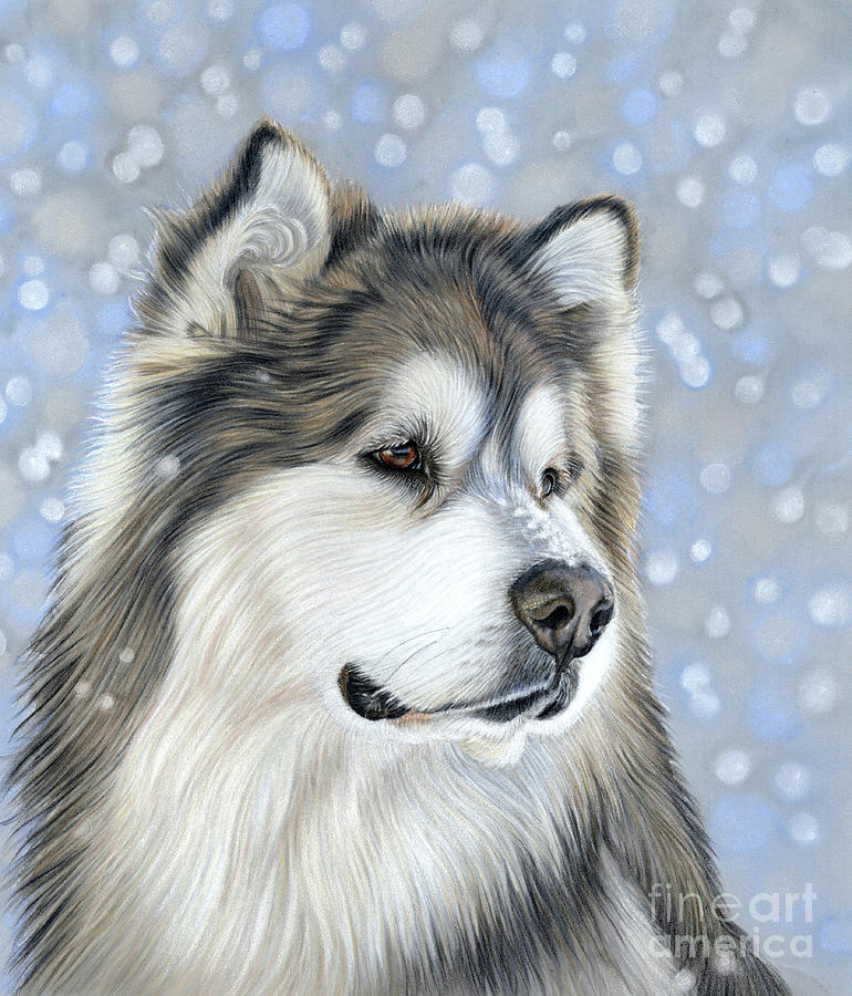 Alaskan Malamute Mixed Media - Alaskan Malamute by Donna Mulley