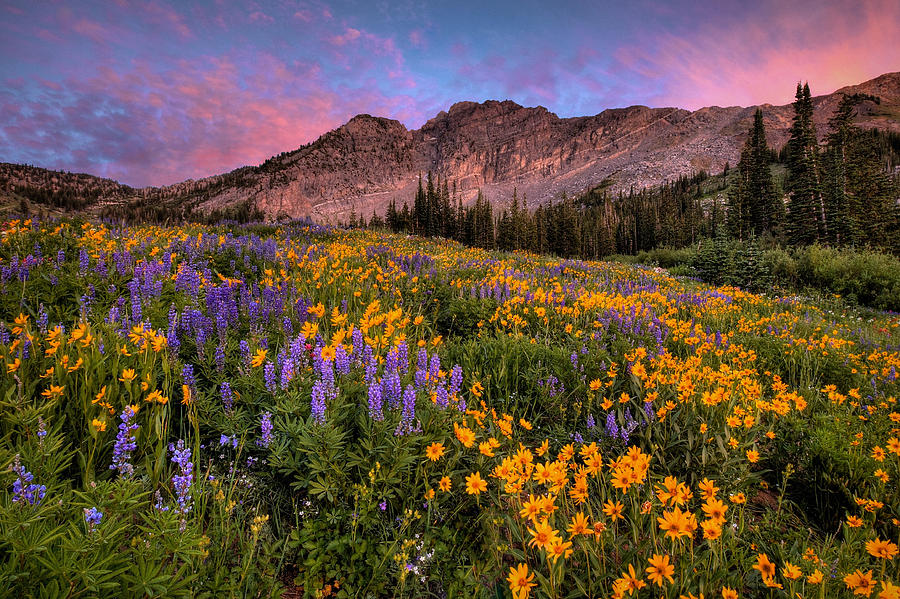 Albion Basin Photograph - Albion Wild by Ryan Smith
