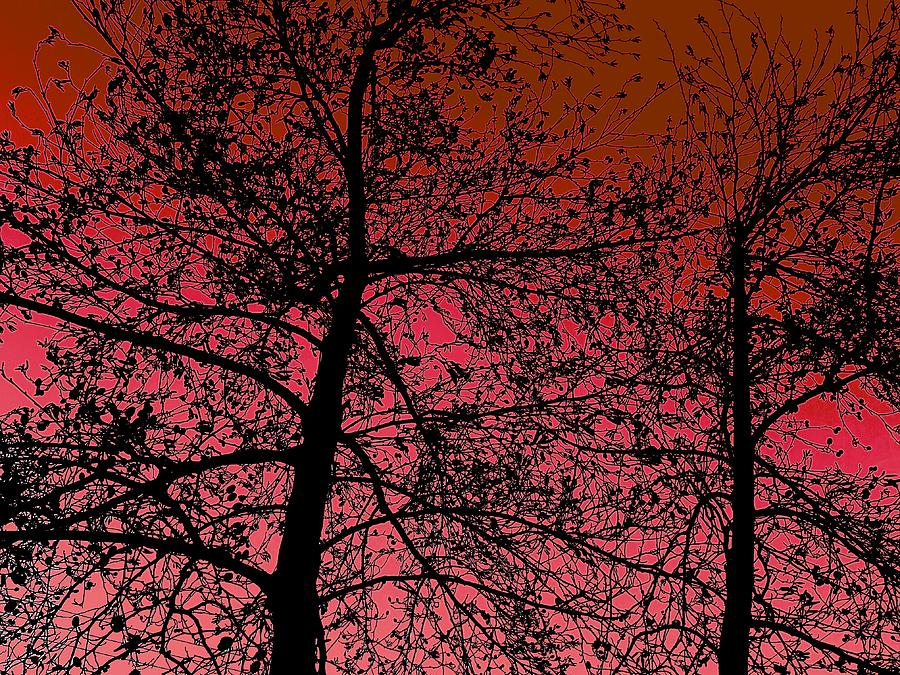 Winter Photograph - Alder Trees Against The Winter Sunrise by Colin Drysdale