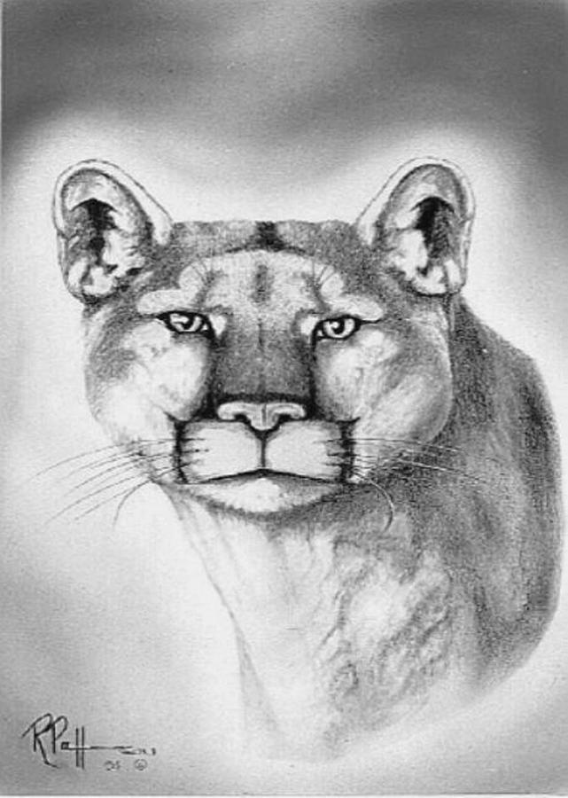 Wildlife Drawing - Alert Cougar by Bob Patterson