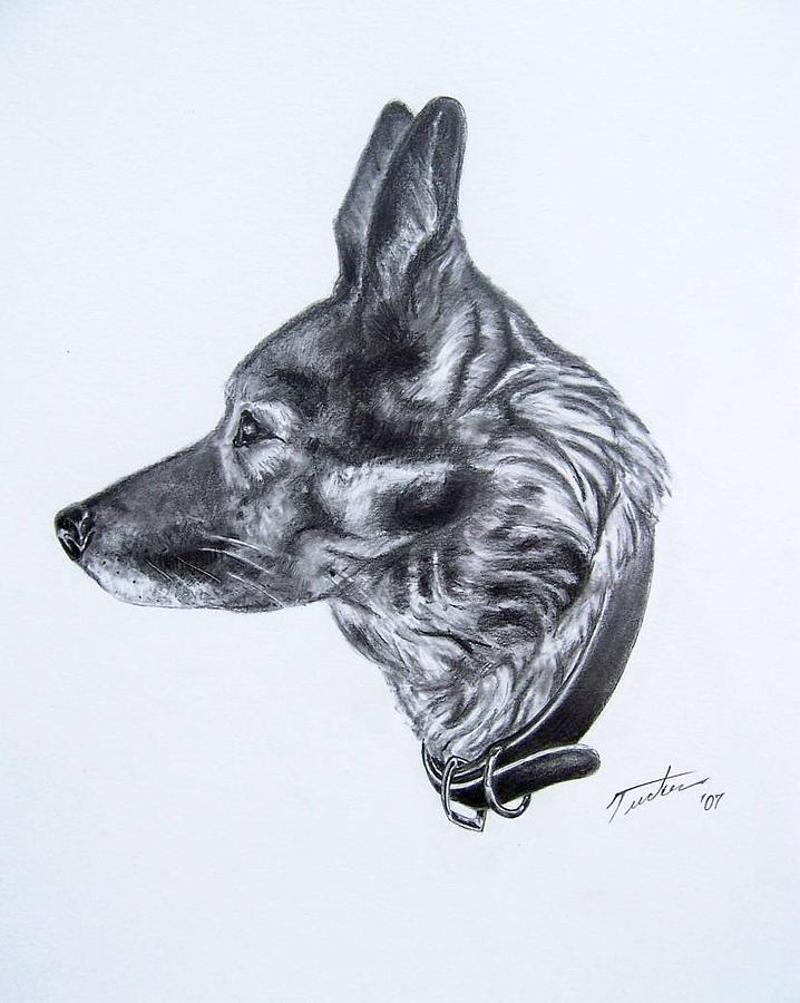 Dog Drawing - Alex by Andrew Tucker