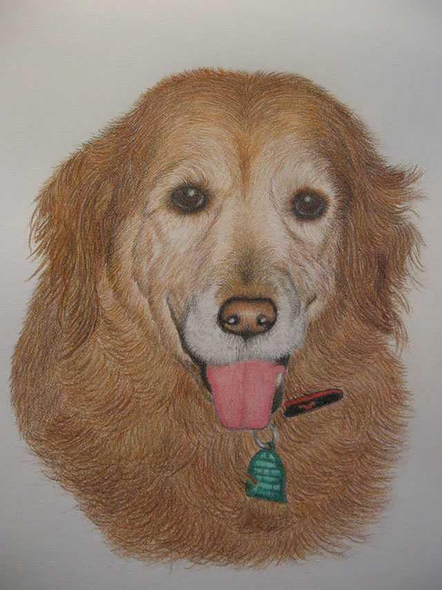 Dog Drawing - Alexis by Kathie Papasso