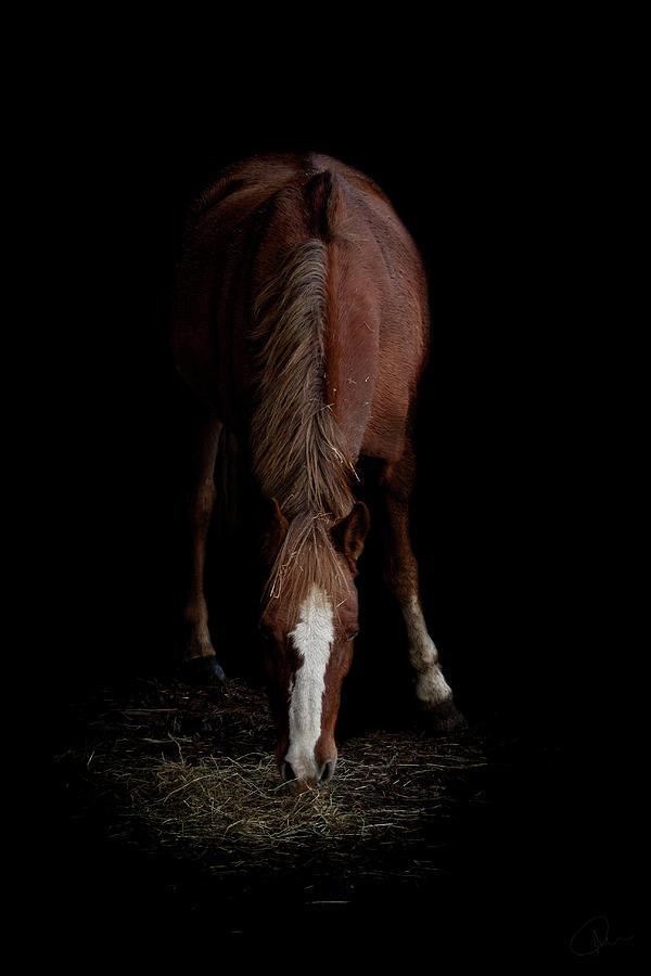 Pony Photograph - Alfresco by Paul Neville