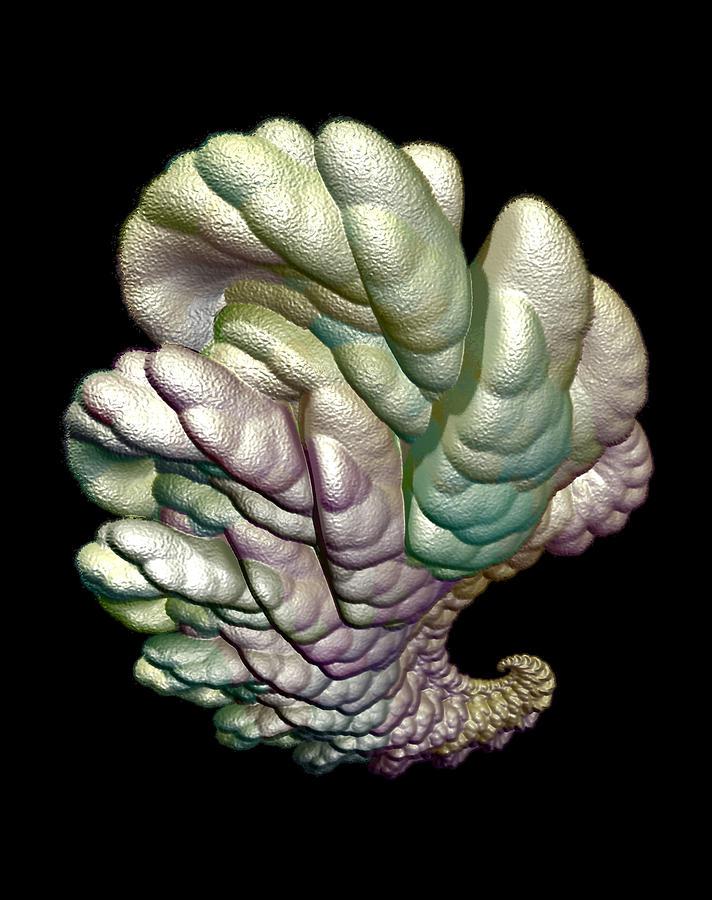 Fractal Digital Art - Alien Brain by Frederic Durville