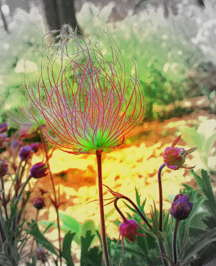 Flowers Photograph - Alien In The Garden by Julie Lueders