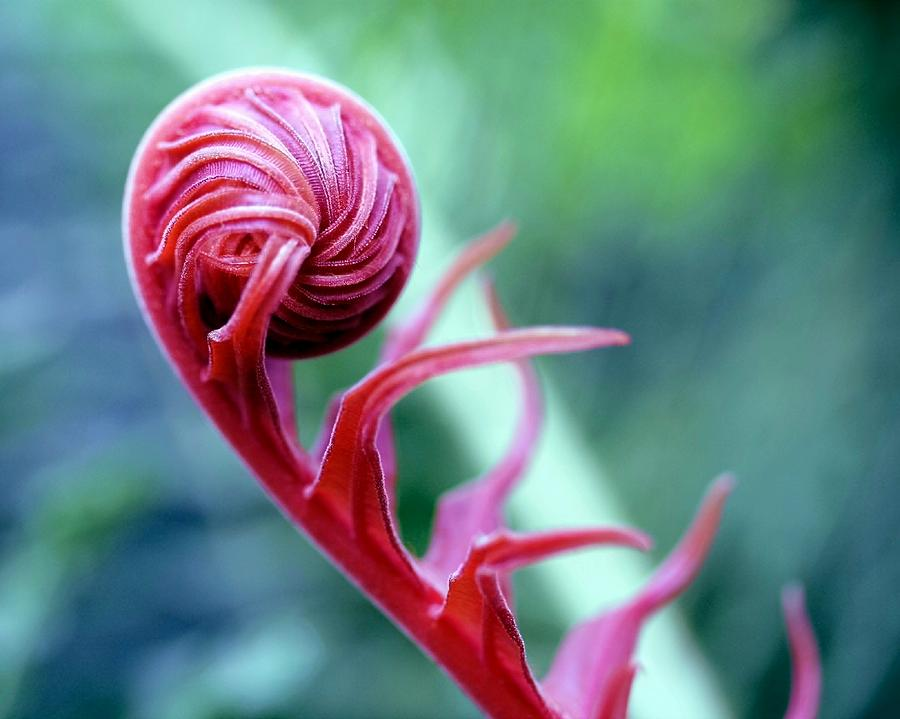 Blossom Photograph - Alien by Mitch Cat