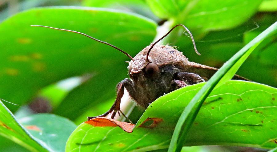 Moth Photograph - Alien Moth by John Topman