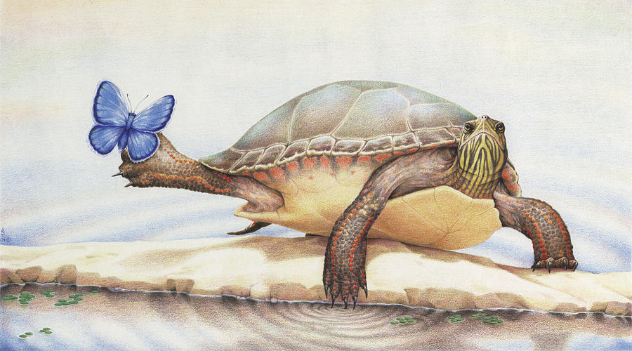 Turtle Drawing - Alight On Her Toes by Amy S Turner