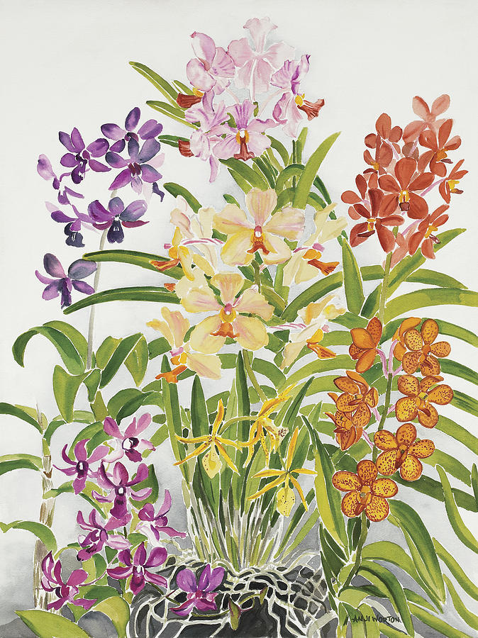 Alis Orchids Painting by Anji Worton