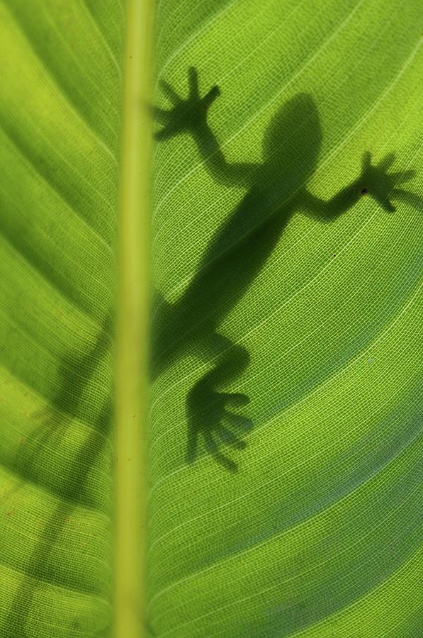 Leaf Photograph - Alive by Dan Holm