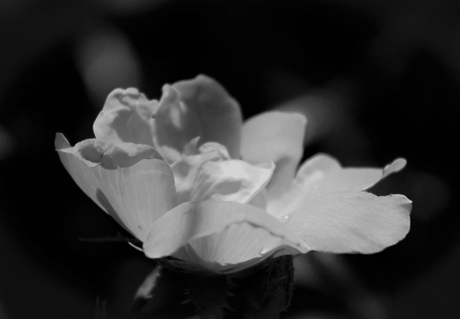 Flower Photograph - All Alone by Todd Dunham