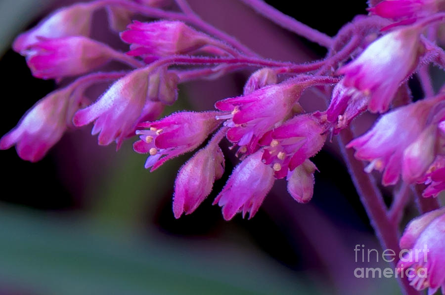 Flowers Photograph - All Apologies by Kristin Hunt