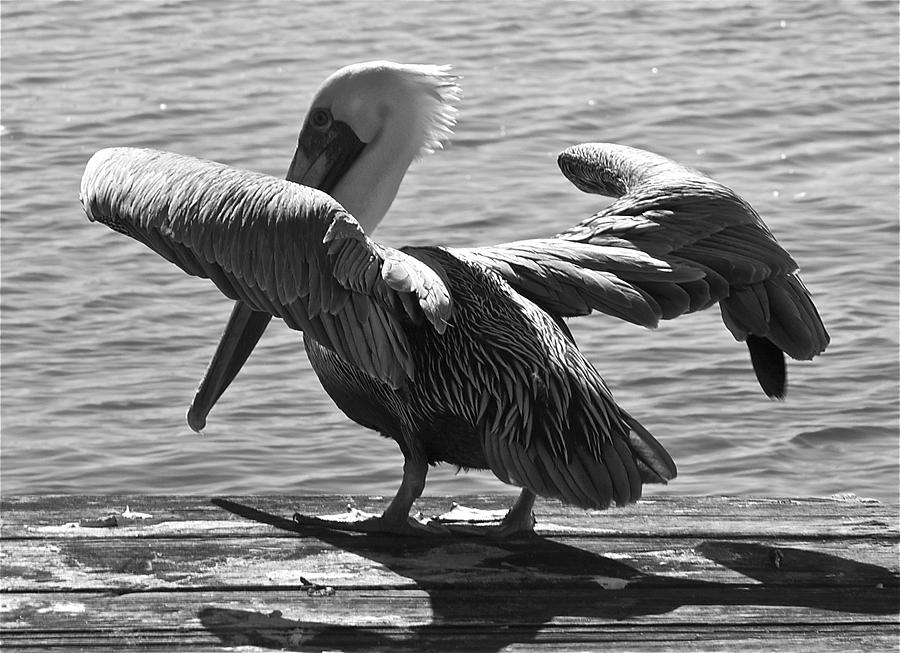 Pelican Photograph - All Clear For Take Off by Bonnes Eyes Fine Art Photography
