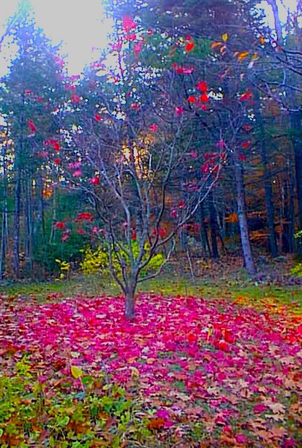 Fallen Leaves Photograph - All Fall Down by Sue Hartman