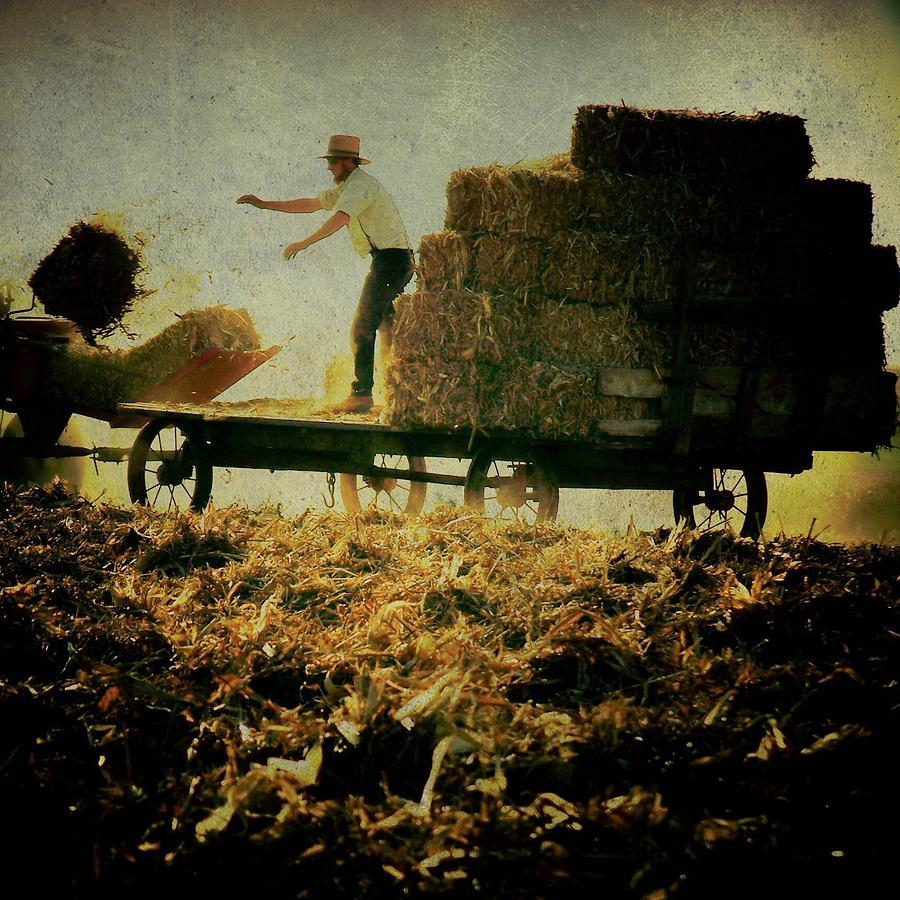 Amish Photograph - All In A Days Work by Trish Tritz