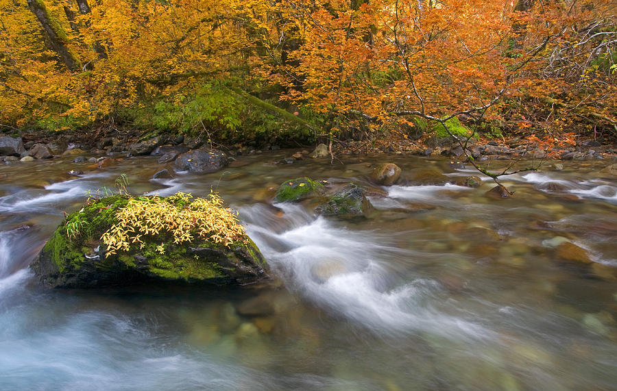 Stream Photograph - All That Is Gold by Mike  Dawson